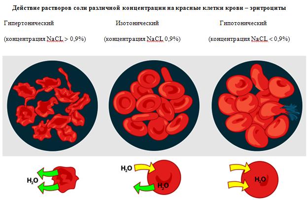 Действие растворов соли на красные клетки крови
