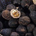 Скорлупа зрелых черных орехов действительно черная и очень прочная