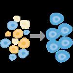 Выделение и активация Т-лимфоцитов