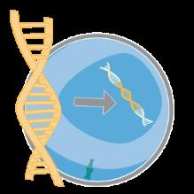 Инновационную технологию терапии рака генномодифицированными Т-лимфоцитами CAR-T внедряют в клиническую практику